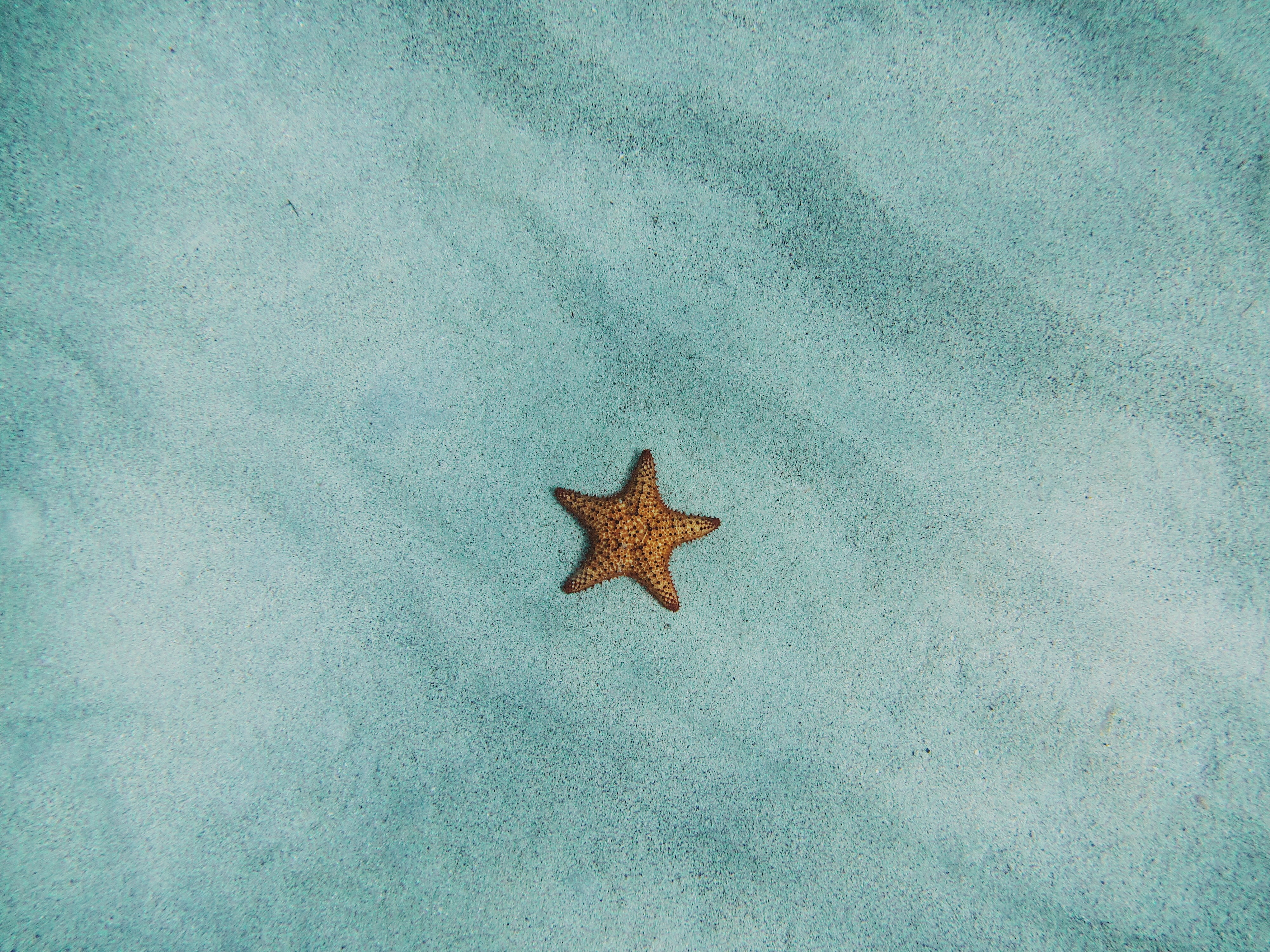 brown starfish on blue sand