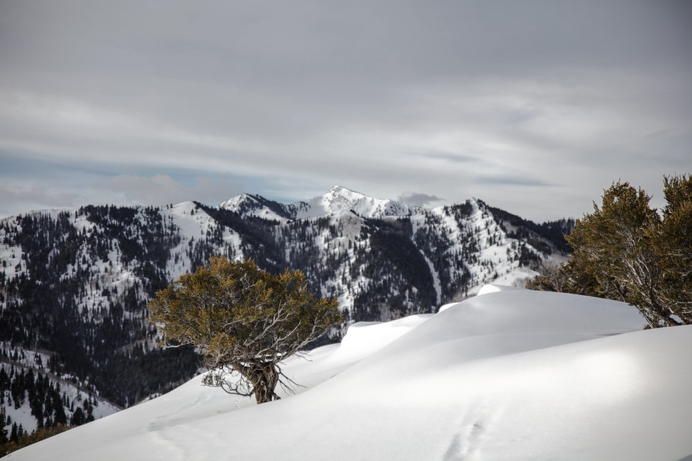 snow-capped mountain with trees
