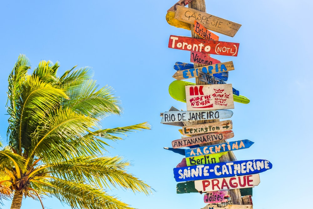 coconut tree beside wooden post filled with signboards