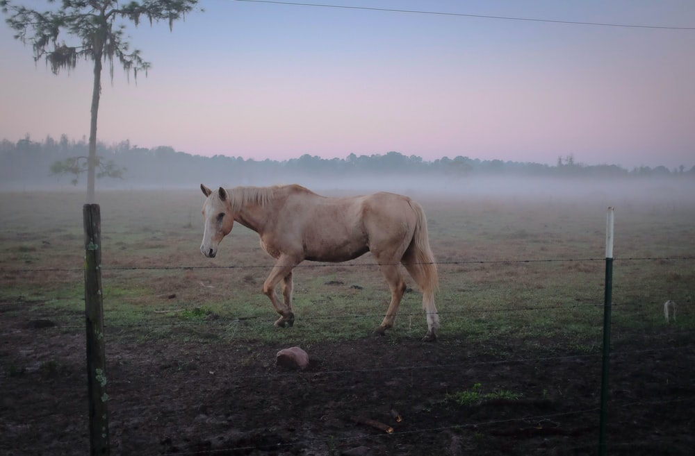 brown horse standing on green grass near fence