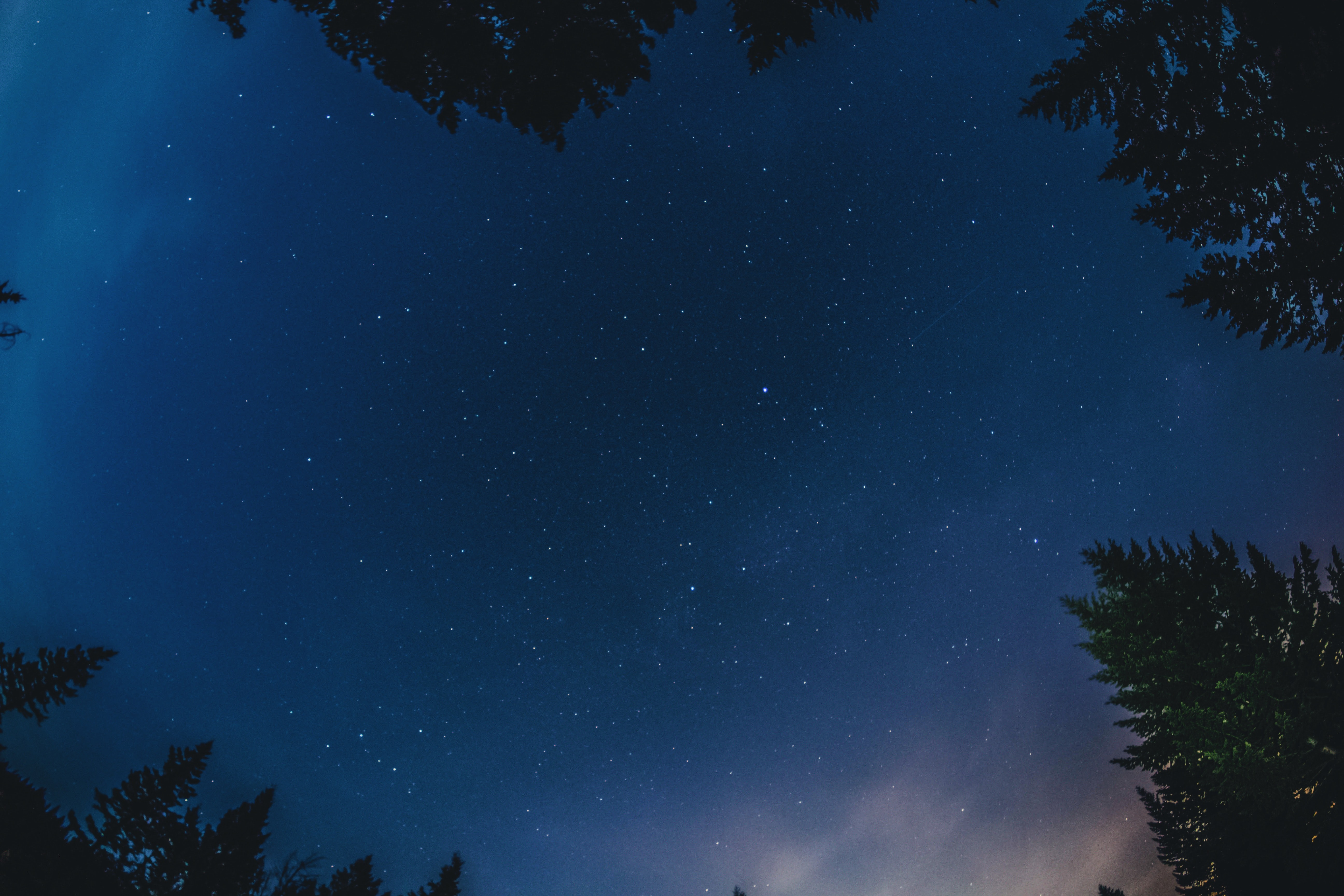 Looking up at the starry night sky over the pine trees in Banff