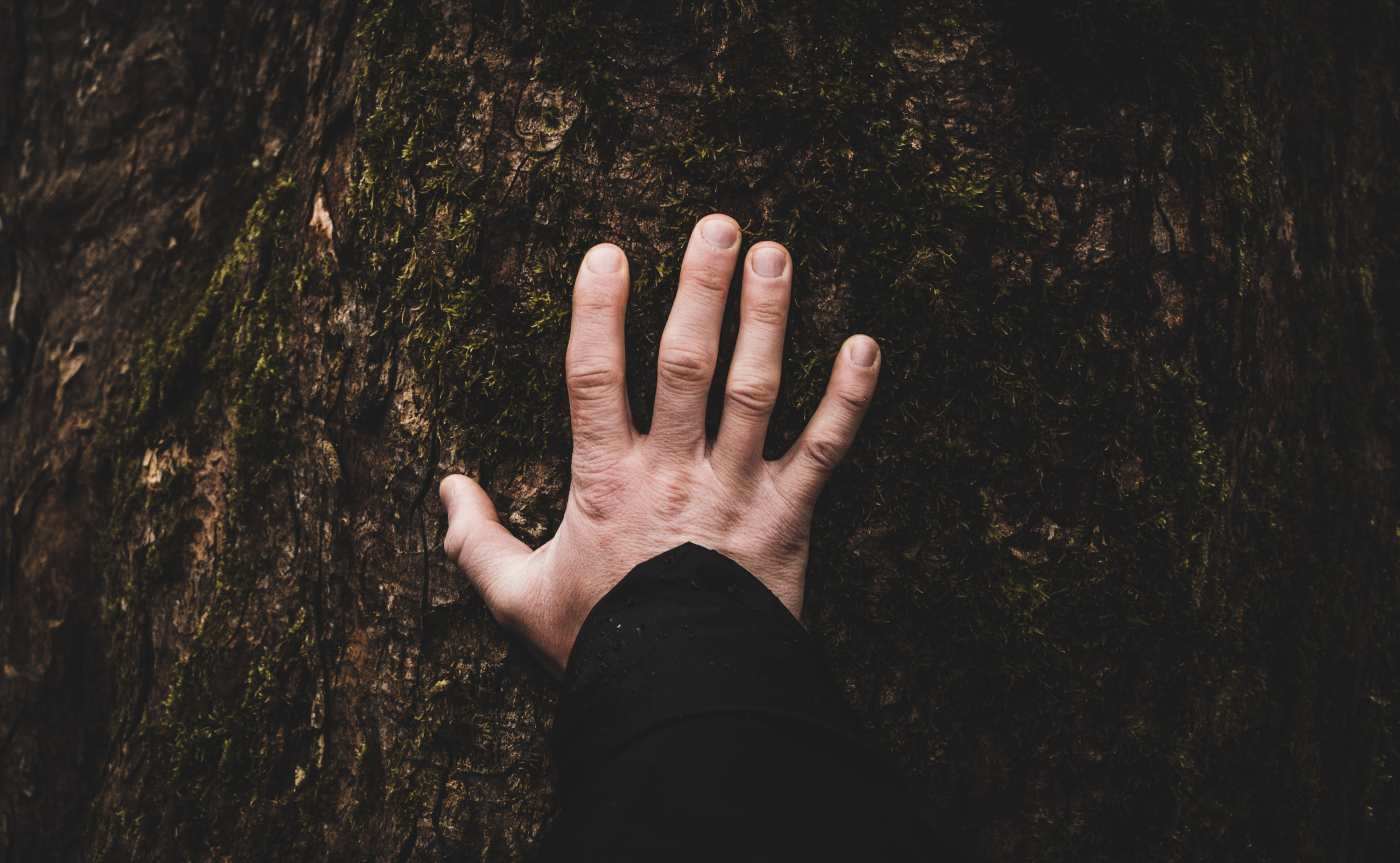 The author added a photo of a man's hand which is placed on the bark of a tree