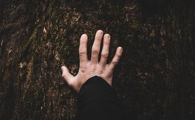 person tounching tree
