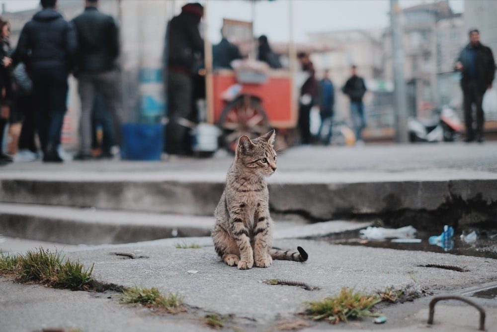 Domestic cat sitting on sidewalk with people walking in background, New York, Teksas, Birleşik Devletler
