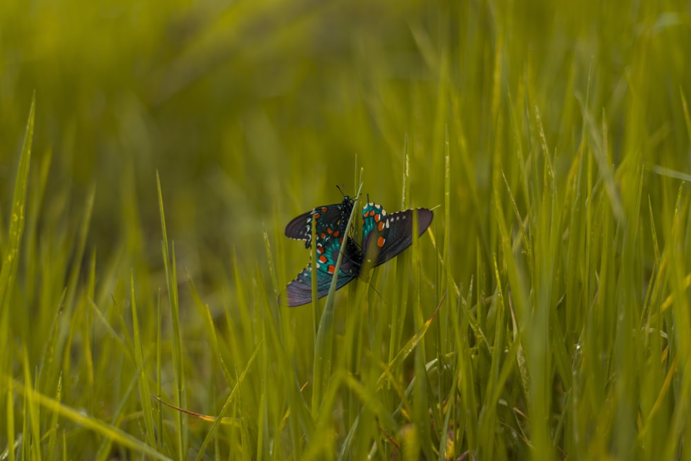 green and black butterfly on green grass