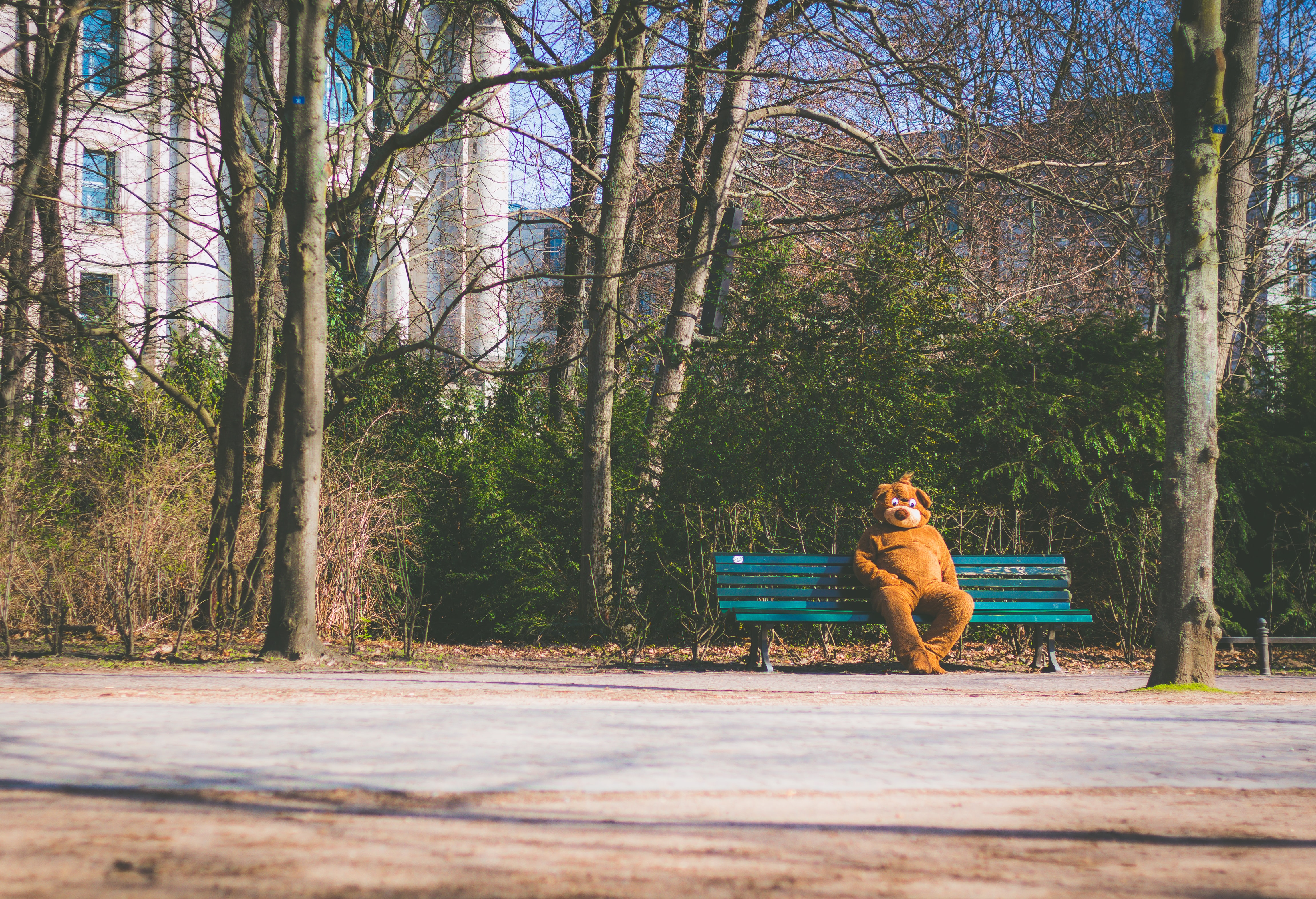 brown bear mascot sitting on teal wooden bench
