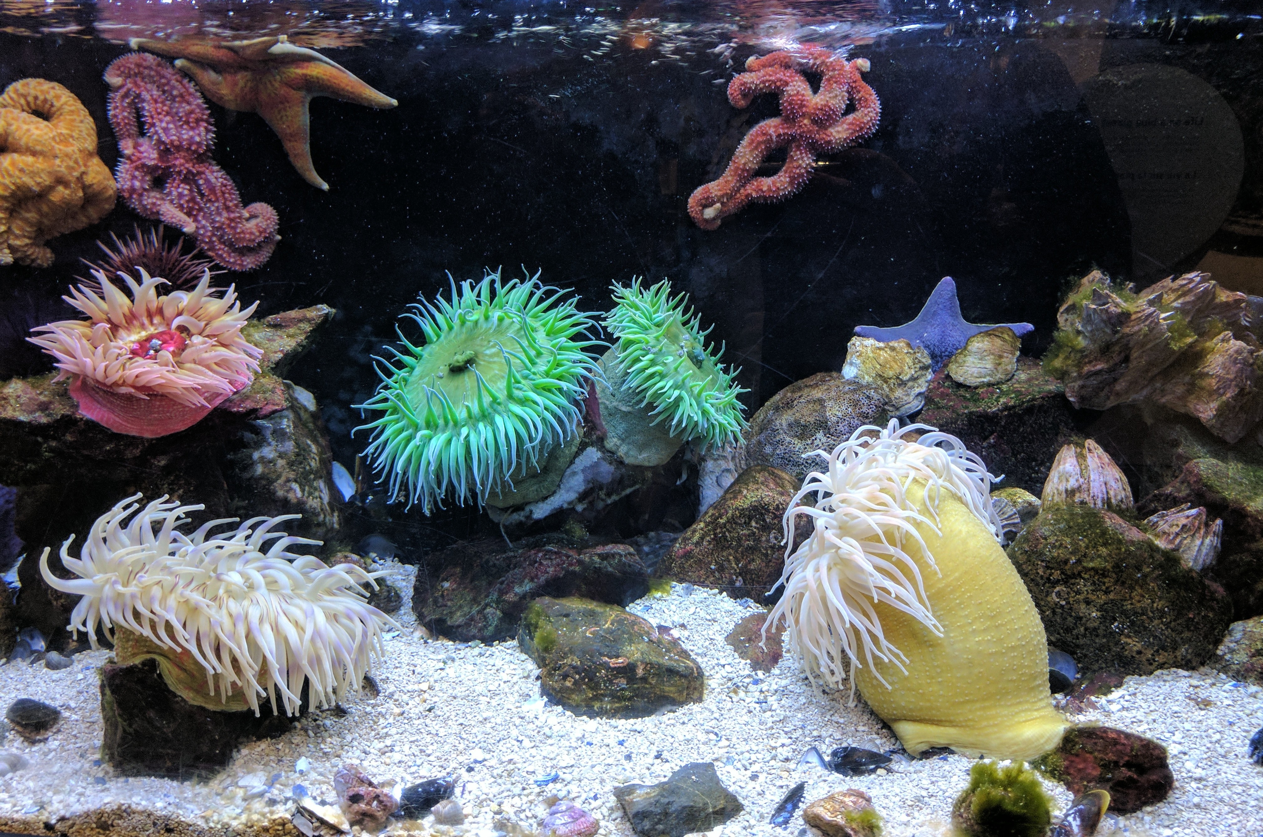 photography of aquarium with corals