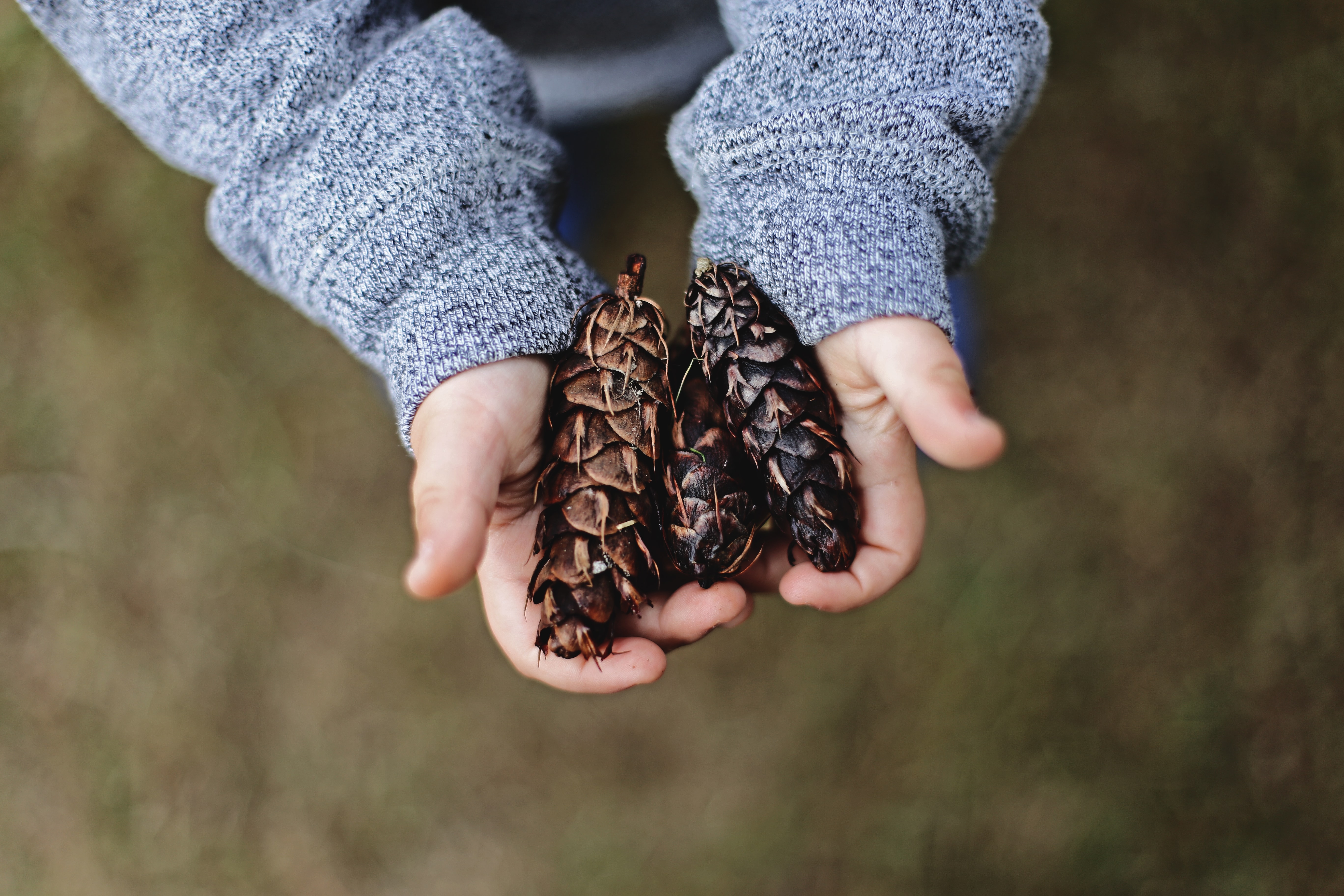 selective focus photography of person holding pine cones