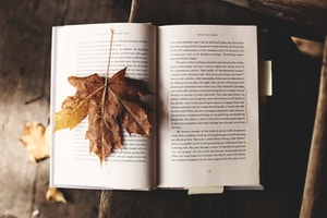 brown maple leaf on open book