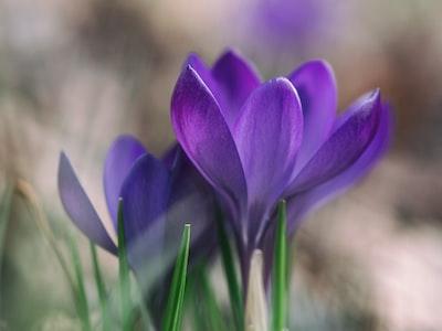 photography of purple flower