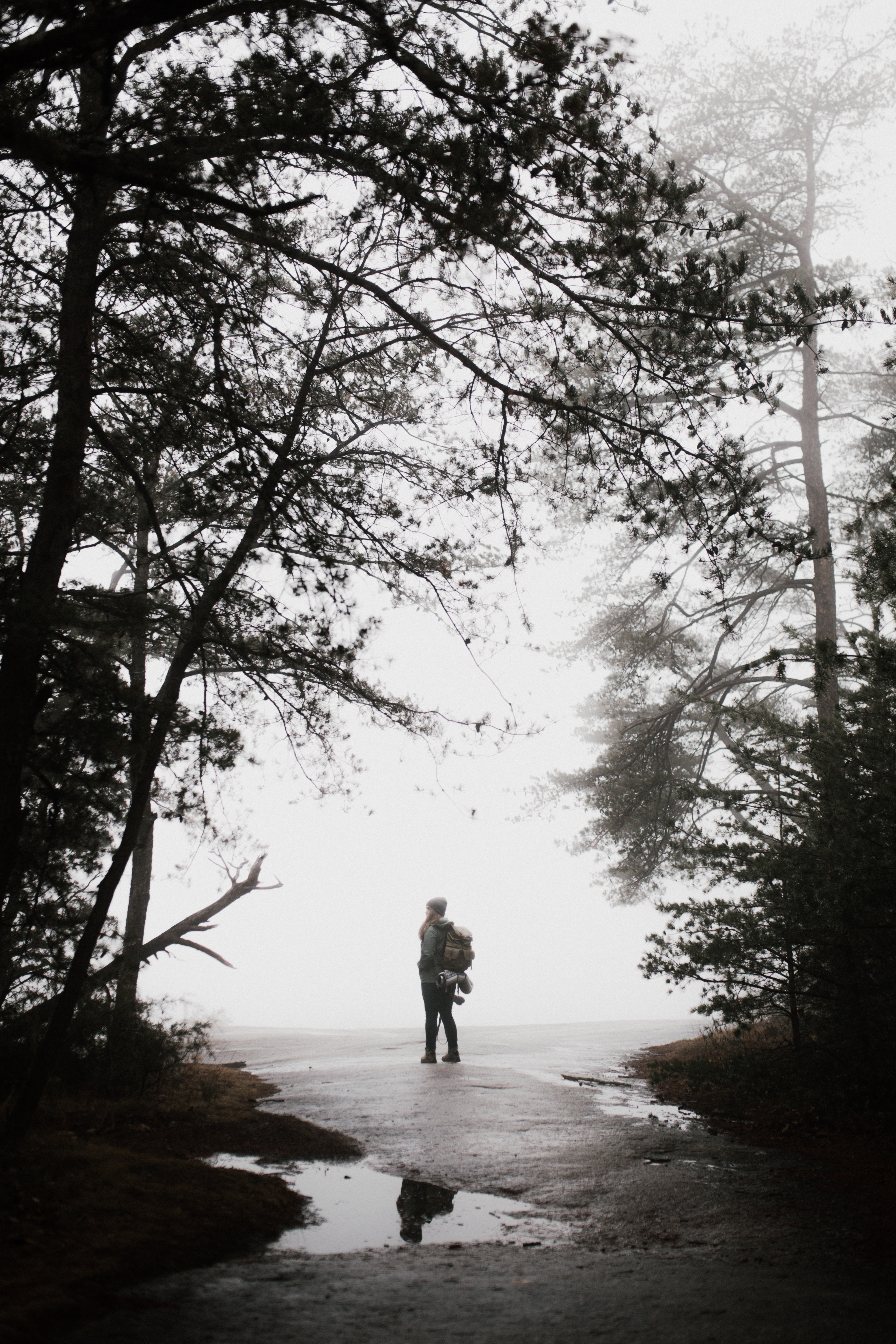silhouette photo of person standing near tree