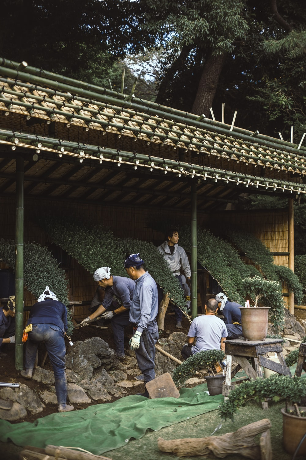 seven persons surrounded with plants
