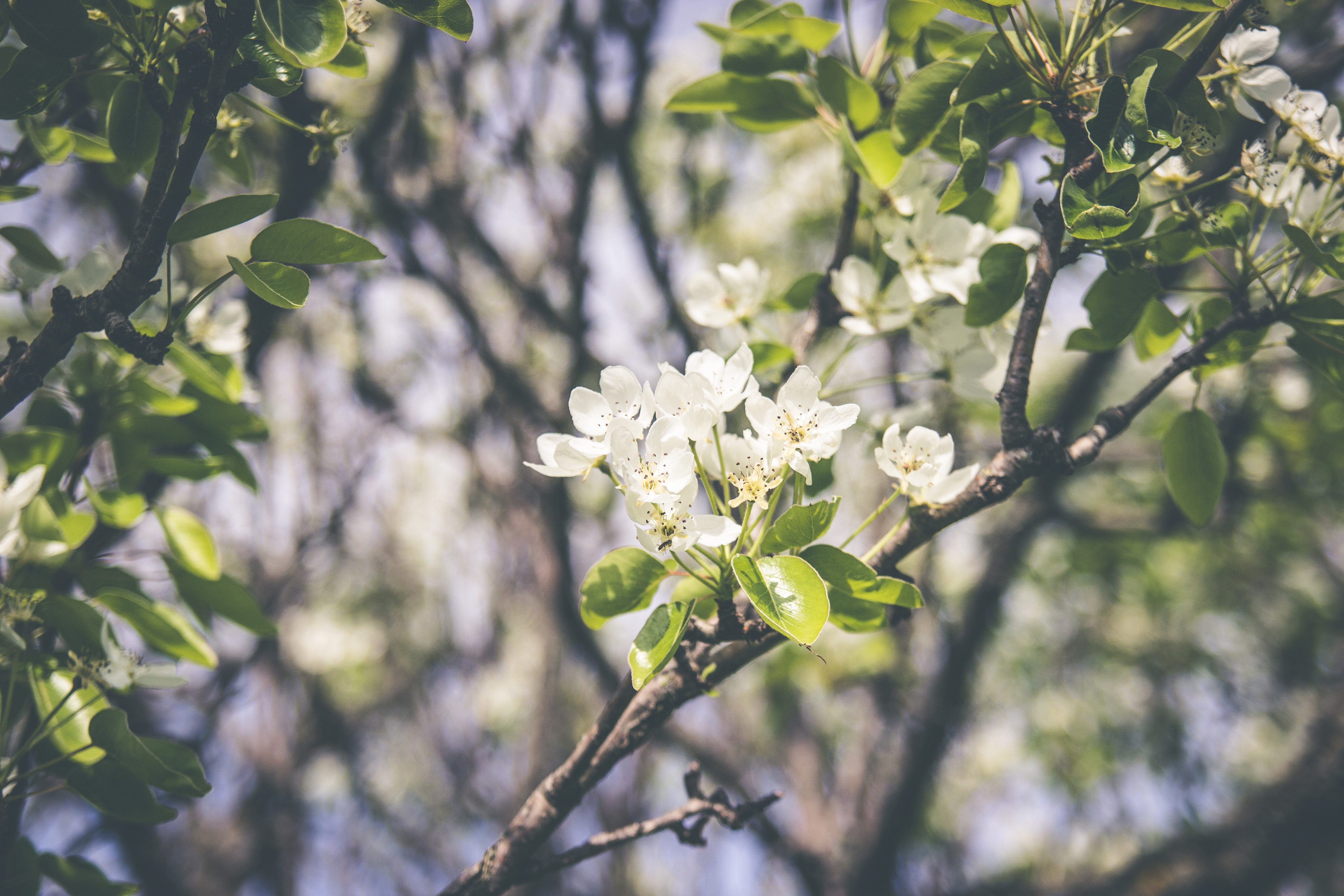 Beautiful tree branch with green leaves and white blossom and sunlight in Spring