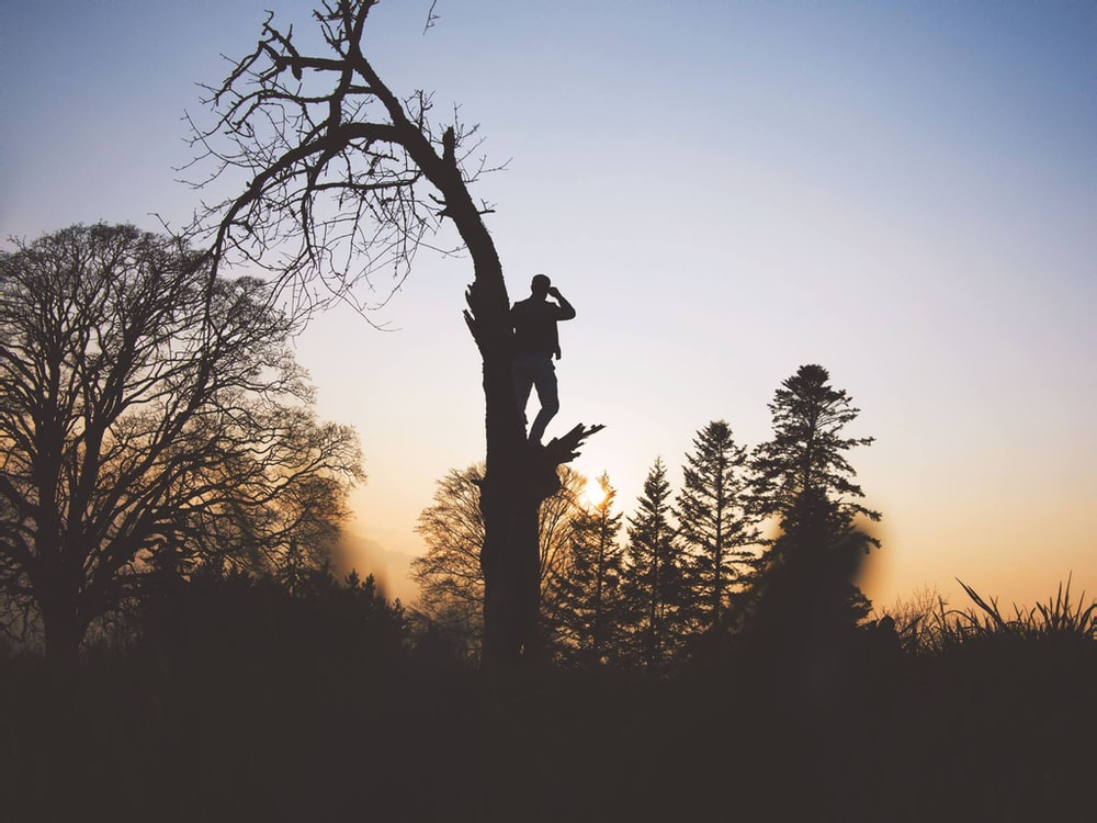 silhouette photography of person standing on leafless tree