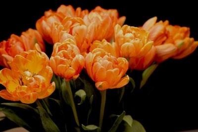 bouquet of peach flowers