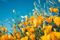 Pretty Flower fiction stories