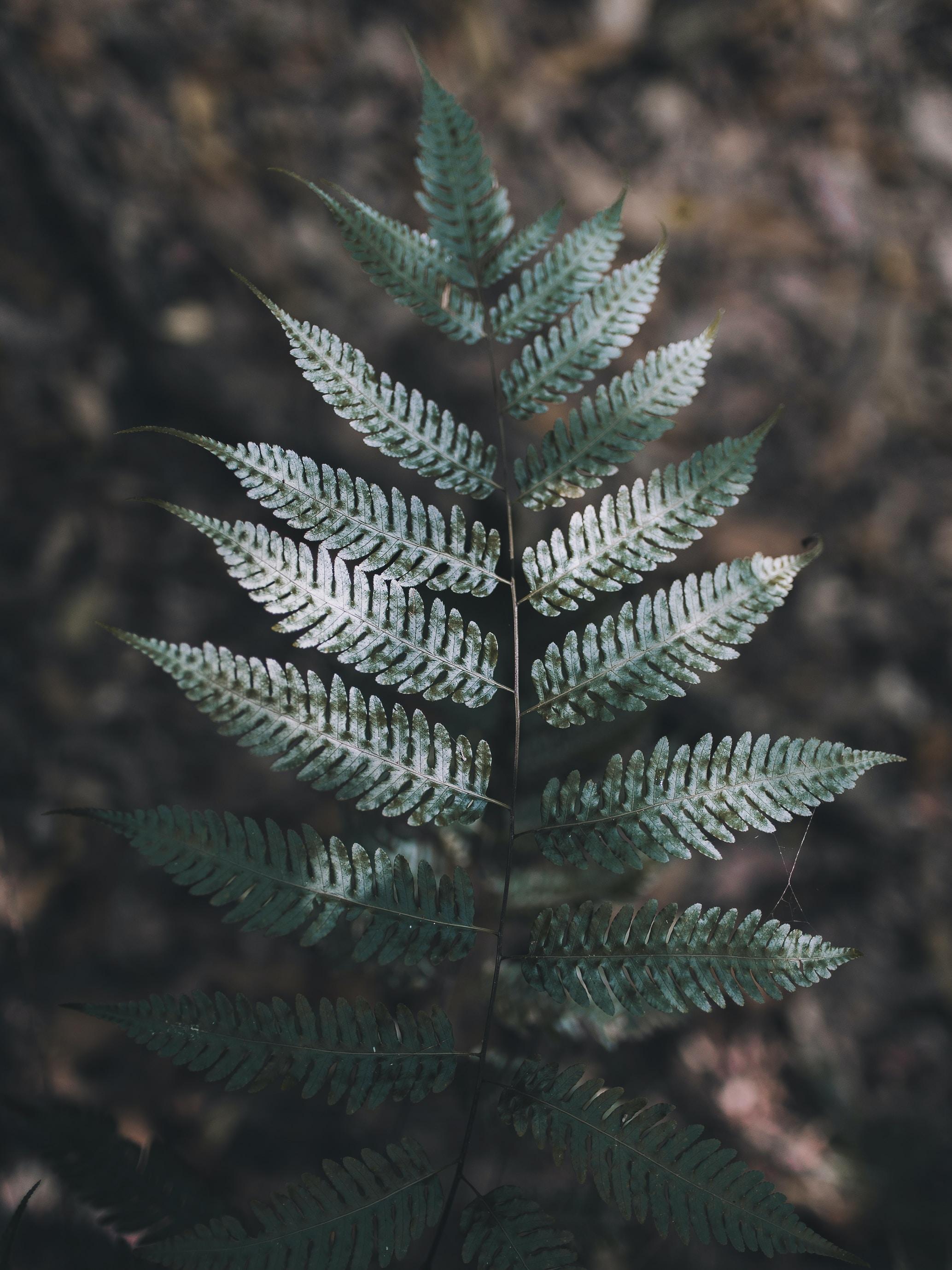 A top view of a dark green fern branch