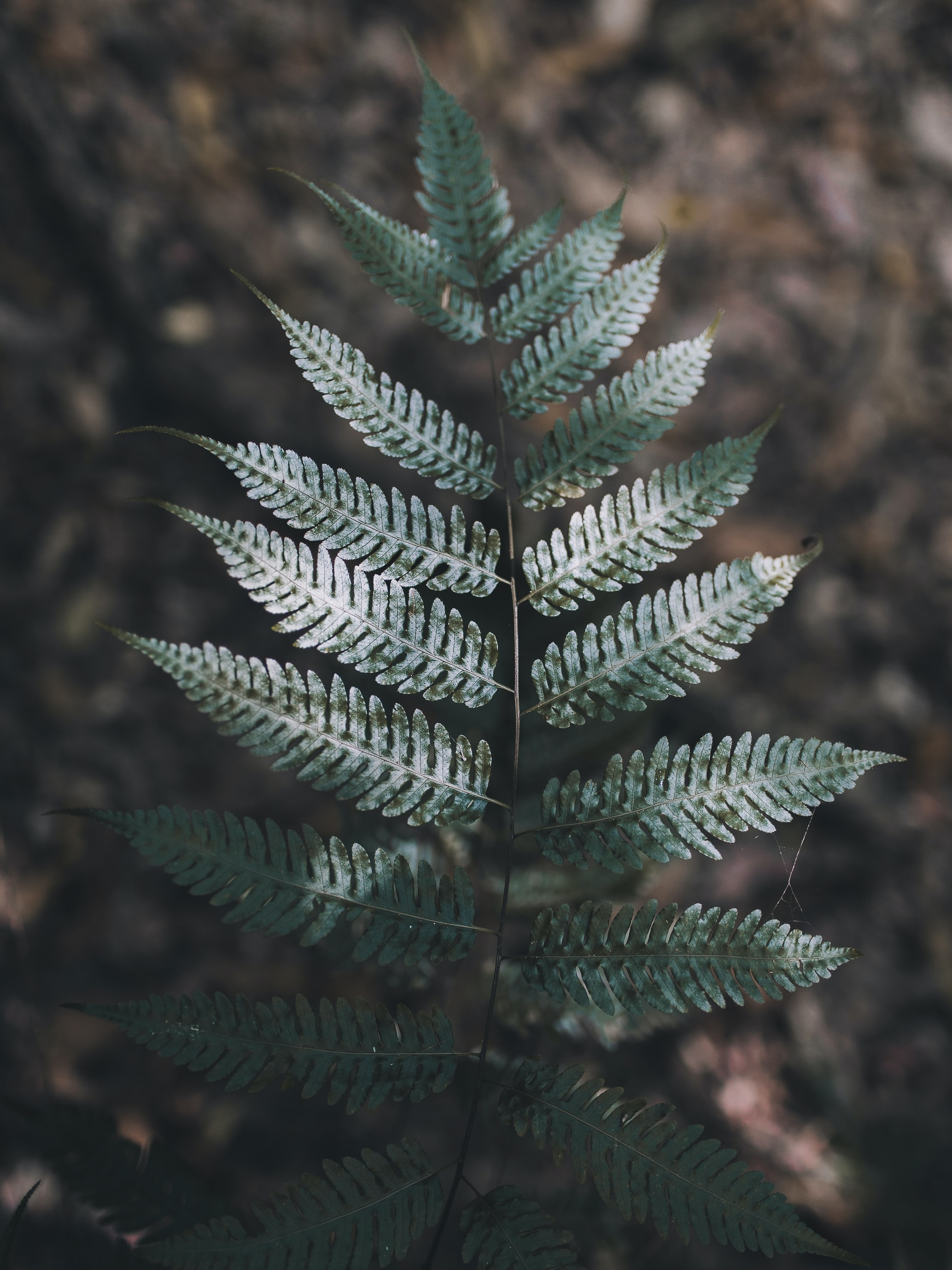 A top view of a dark green fern branch