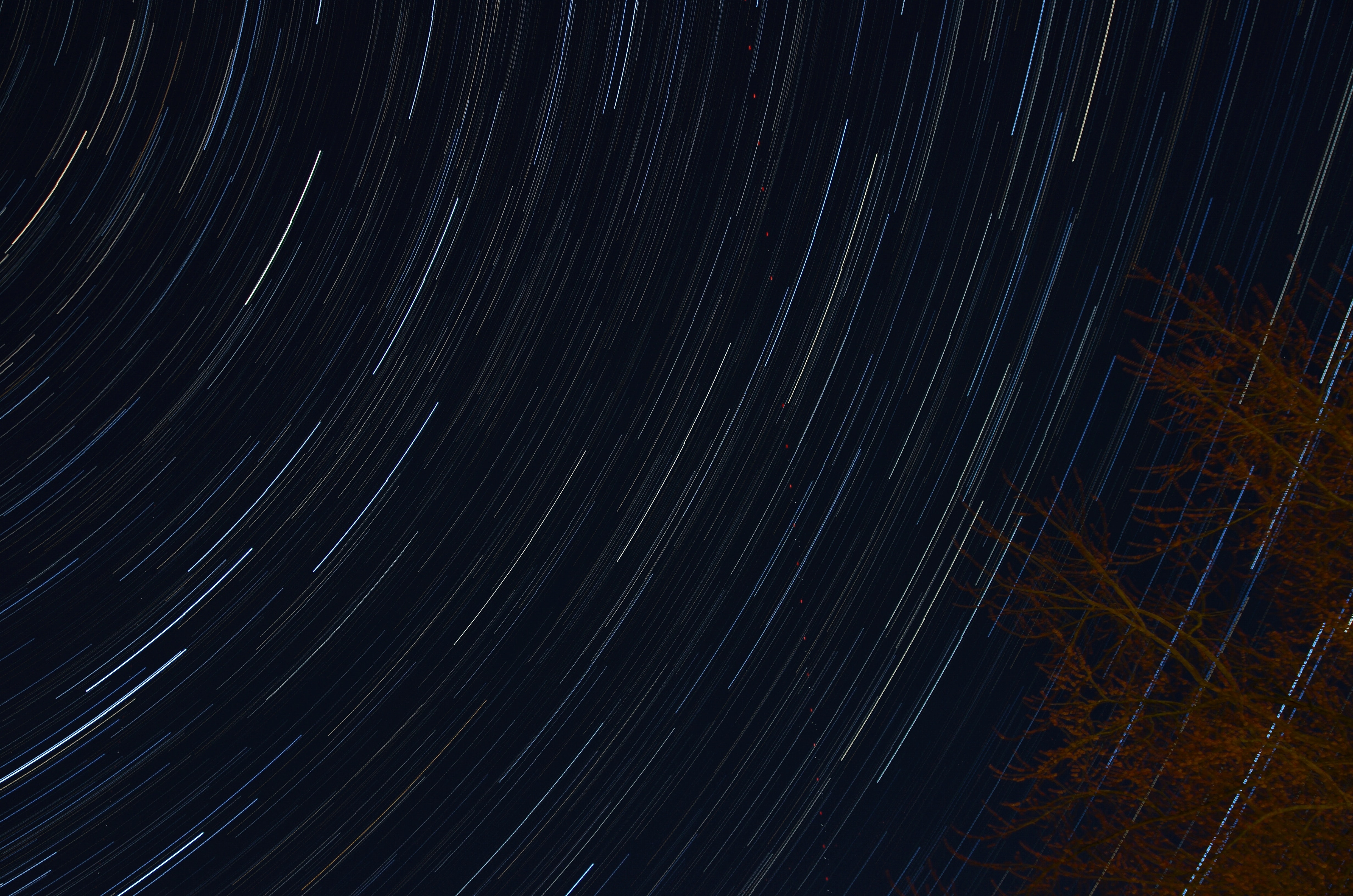 Star trails over the trees at night