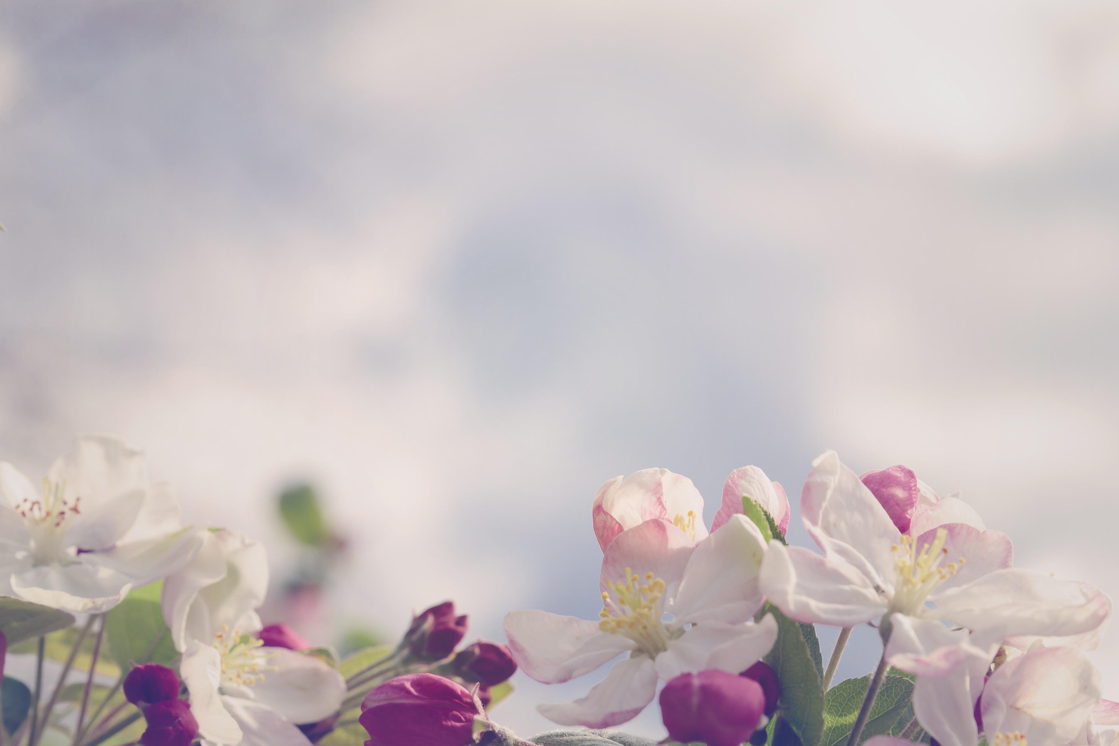 分開再愛?復合的兩難,回頭草的矛盾 - 失戀花園 海苔熊 心理學家