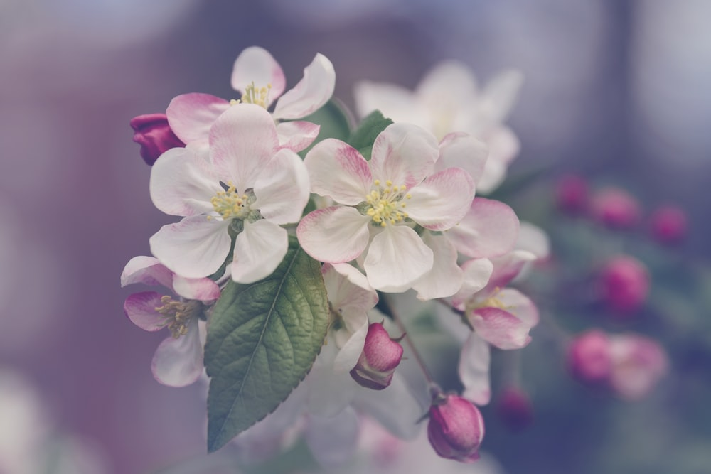 closeup photography of white and pink petaled flower