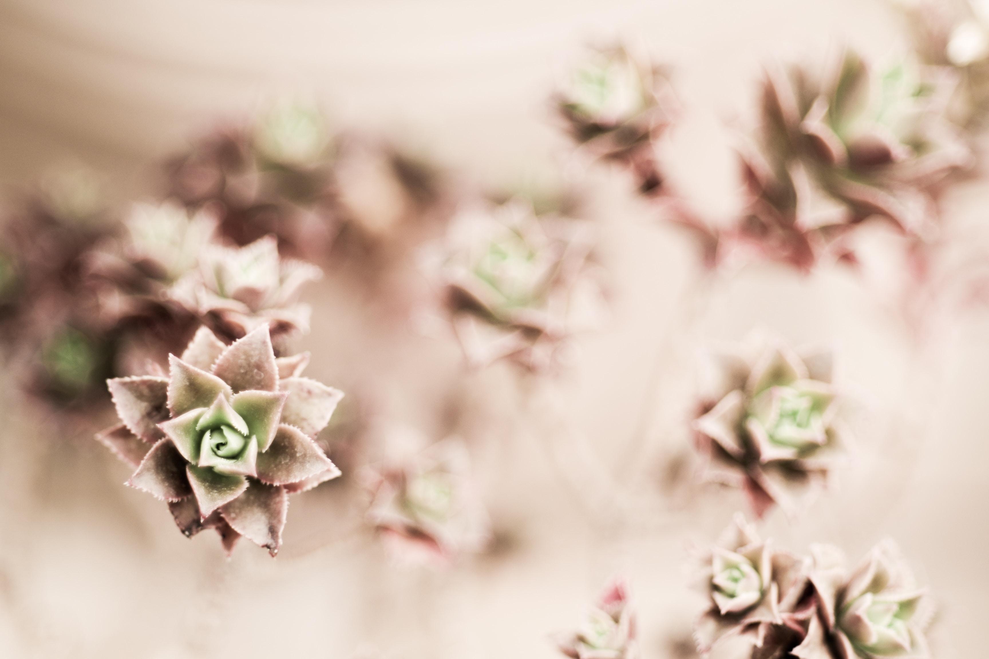 selective focus close-up photo flowers