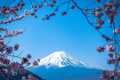 mt. fuji, japan blossom teams background