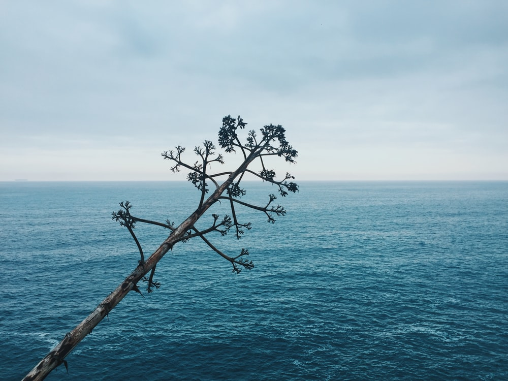 green leafed tree trunk across calm body of water under cloudy sky