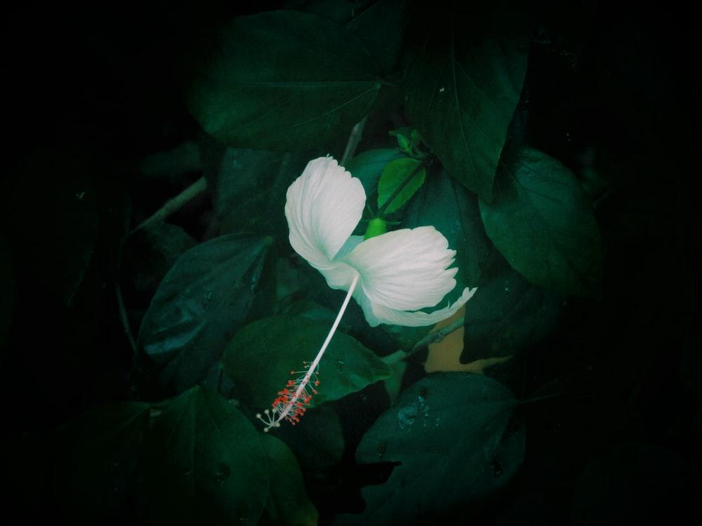 macro photo of white flower