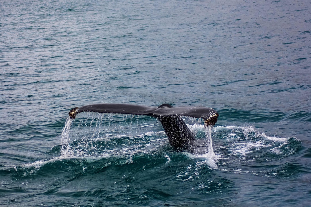 While whale watching