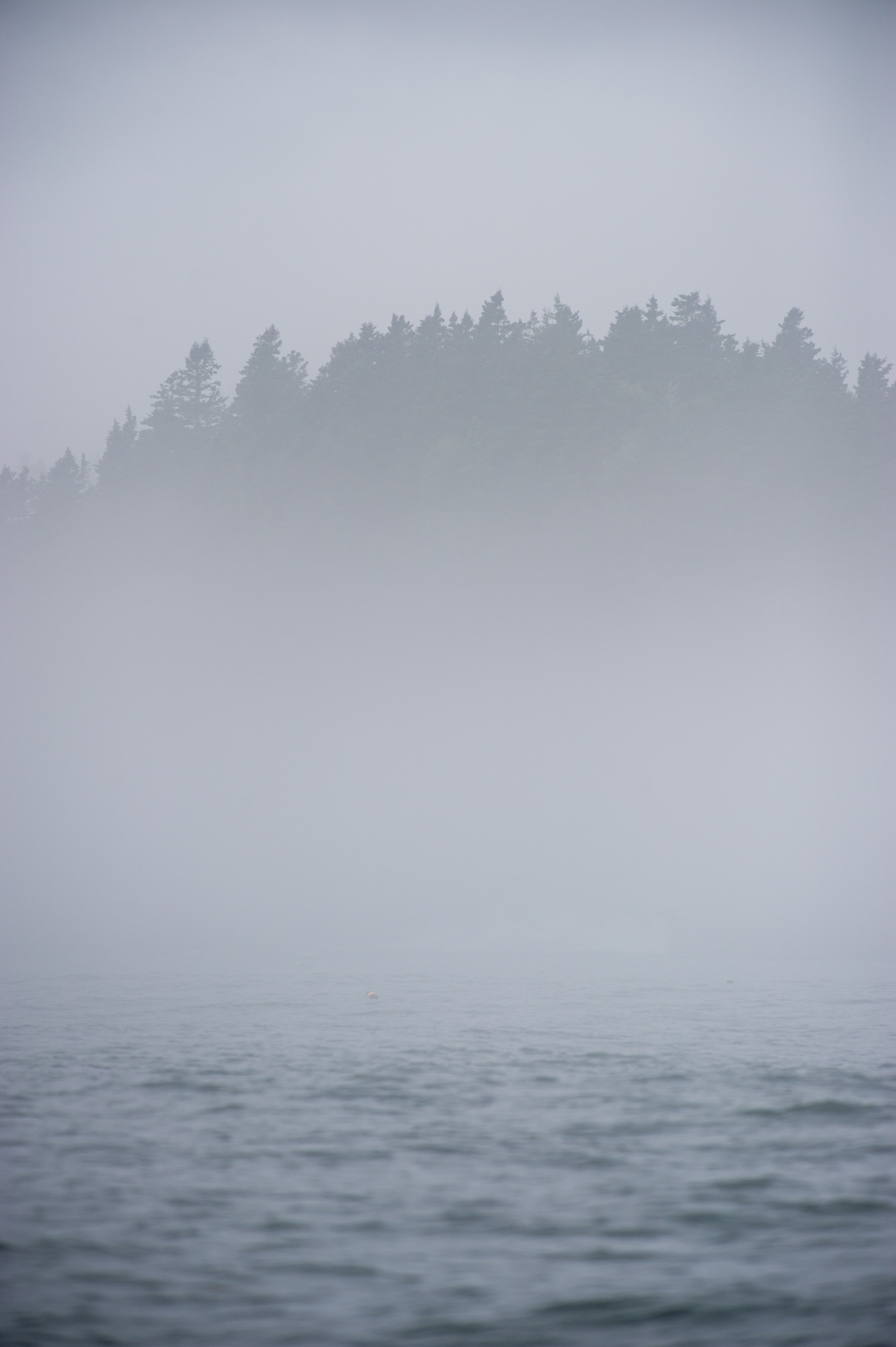 Silhouette of foggy forest on a misty morning by the lake