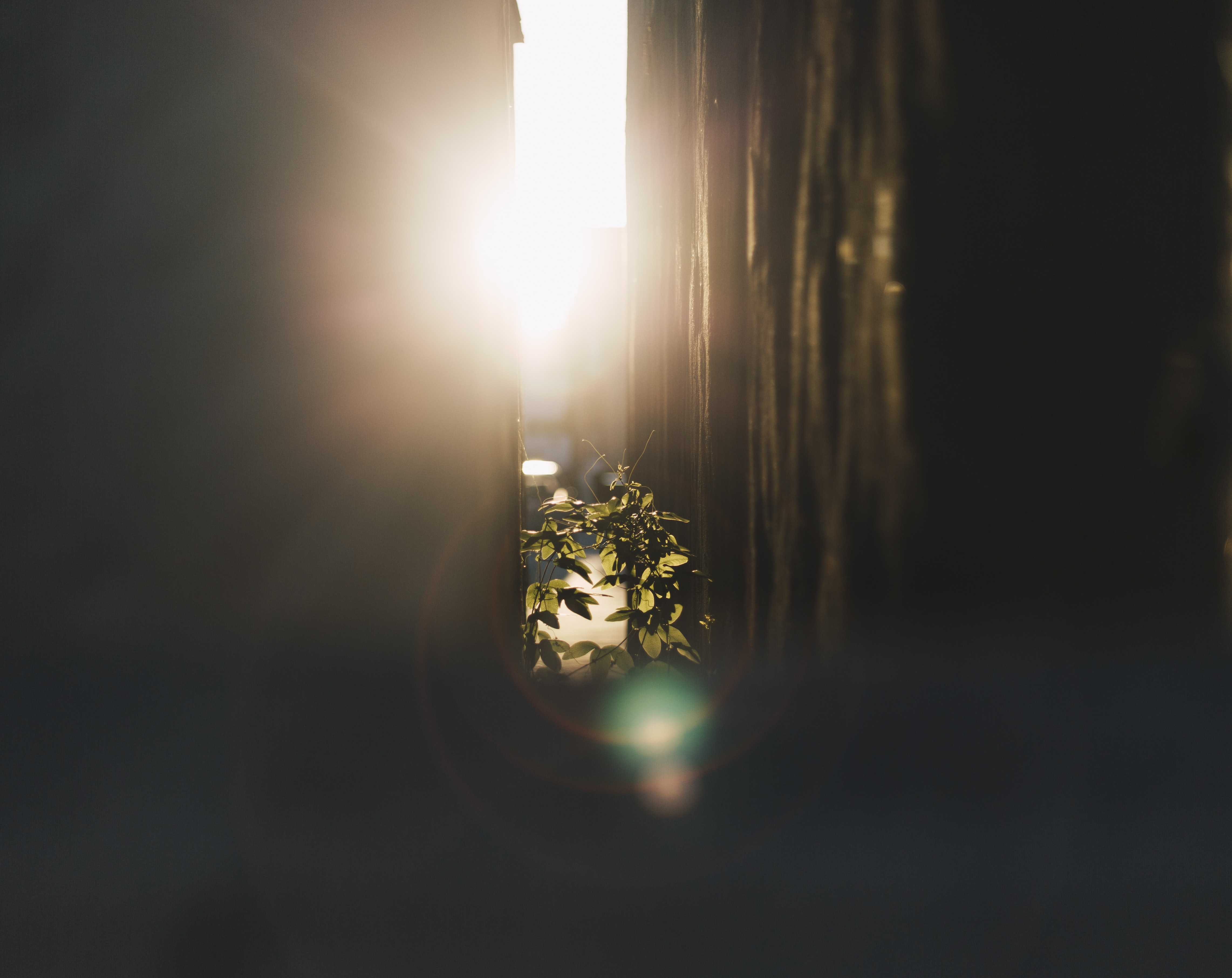 A sun flare in an alley with plants in Los Angeles