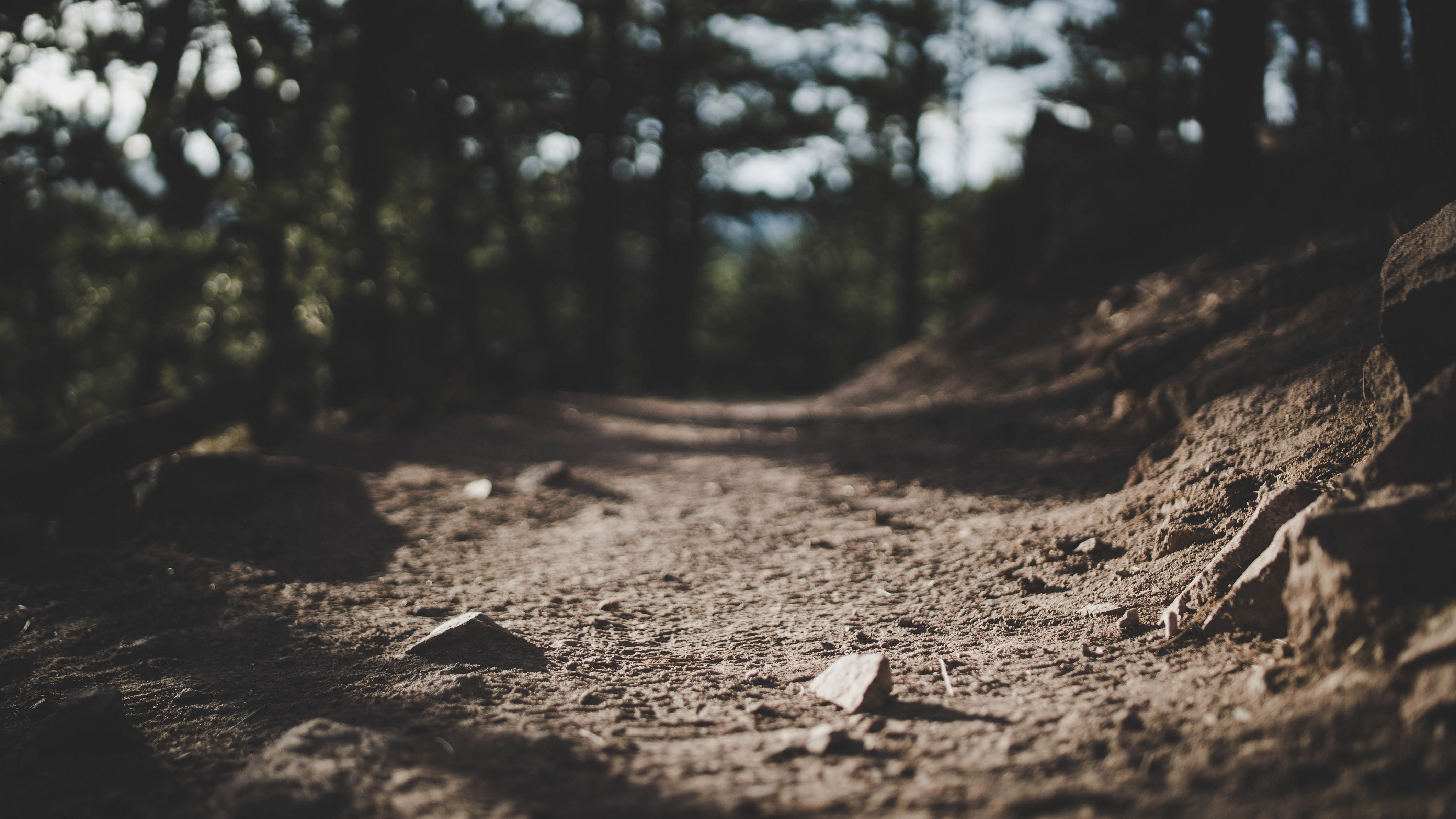 selective focus photography of pathway surrounded by trees