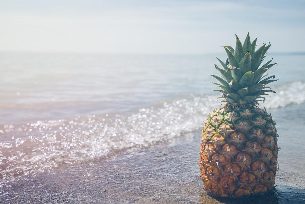 pineapple fruit on seashore photography
