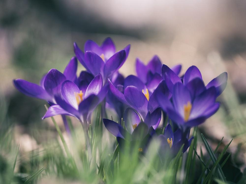 purple petal flower close-up photo