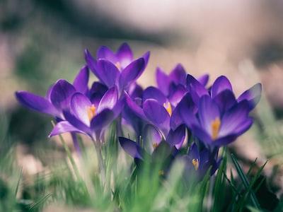 kwiaty-w-trawie