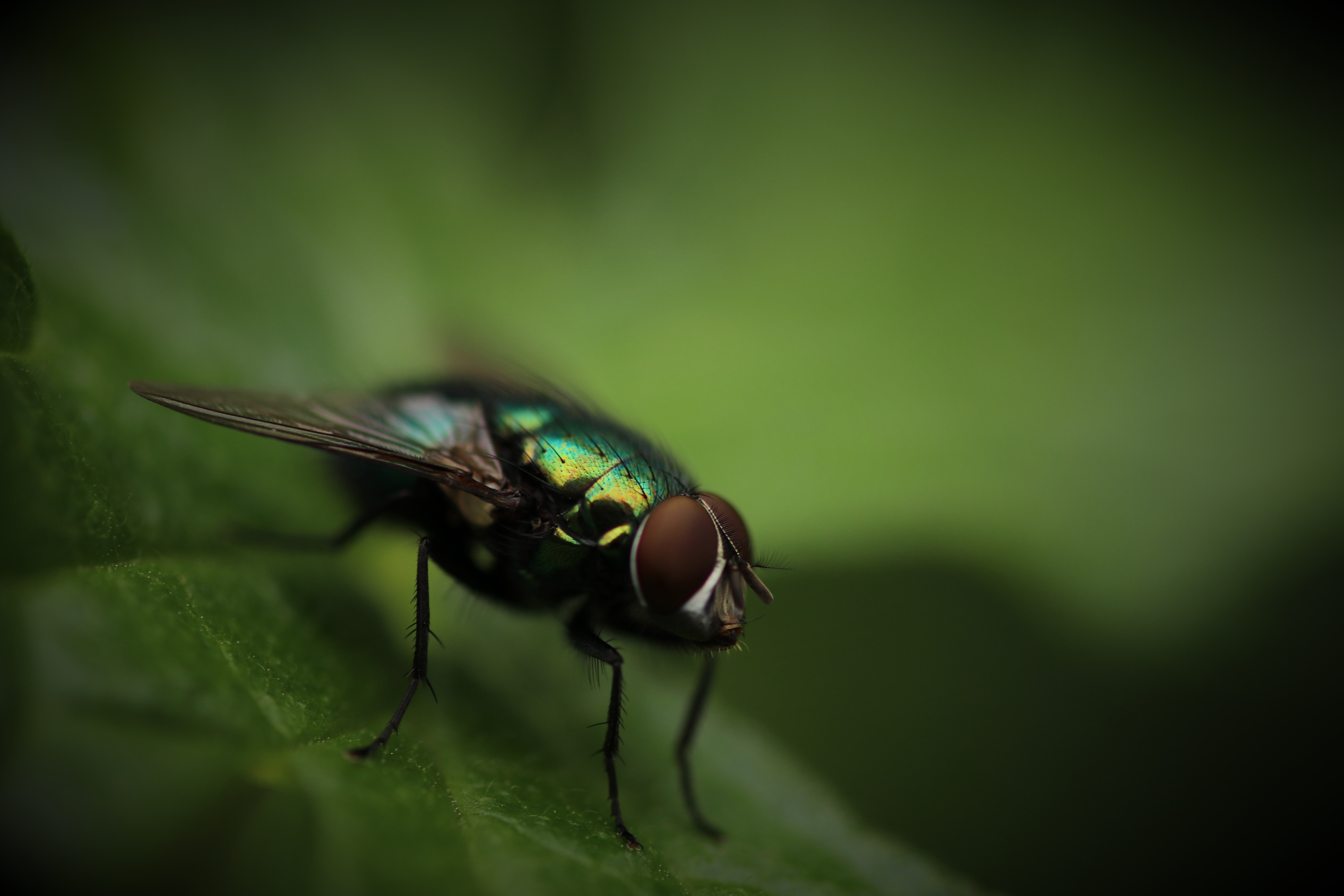 A macro shot of a fly sitting on a leaf