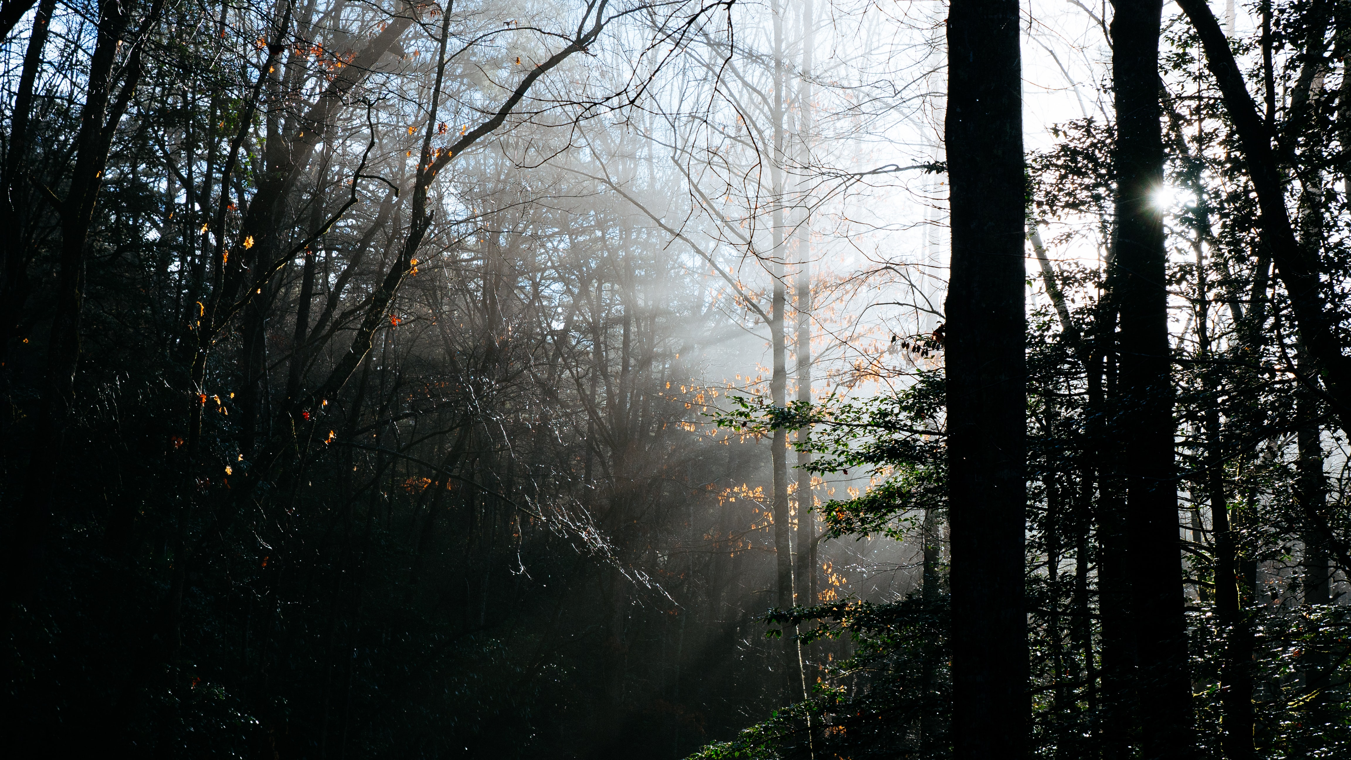 Sunlight breaking through the branches in a dark forest