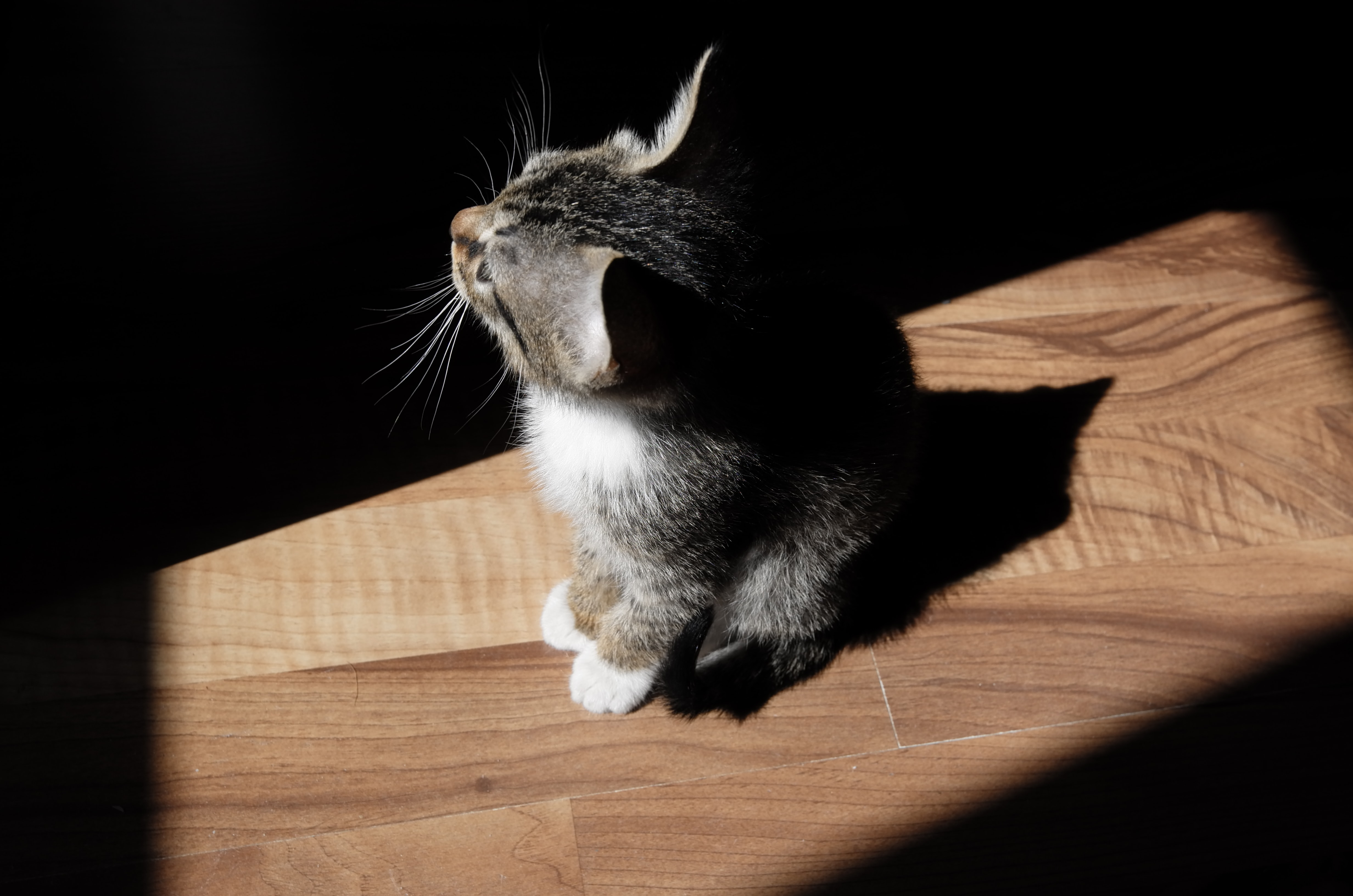 A high-angle shot of a tabby kitten sitting in a patch of sunlight on a wooden floor