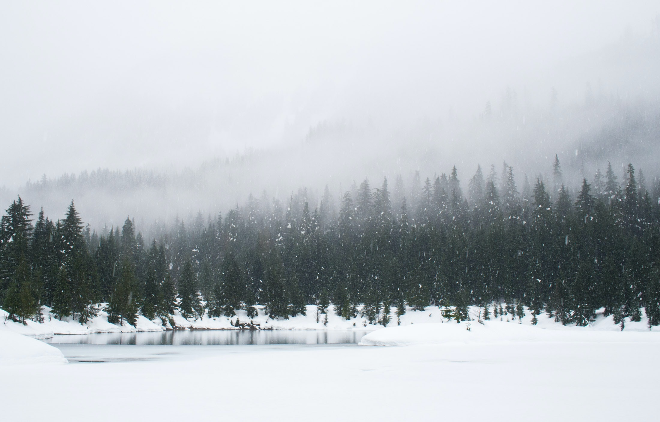 An evergreen landscape shot capturing a foggy, snowy day at a large mountain forest