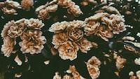 bed brown flowers