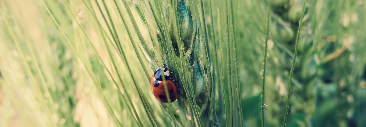 Cute Facts About Ladybugs