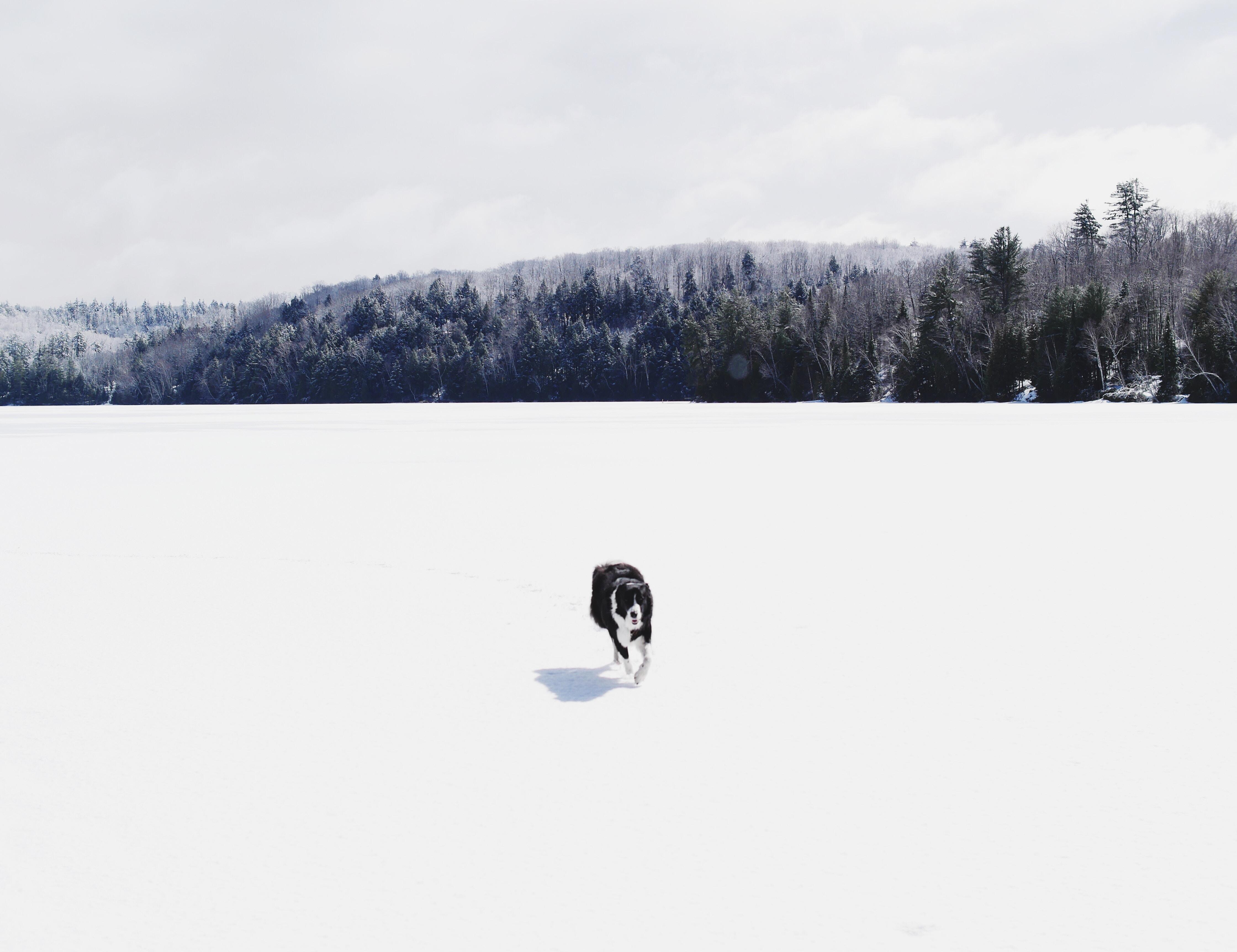 Dog on a snowy plain