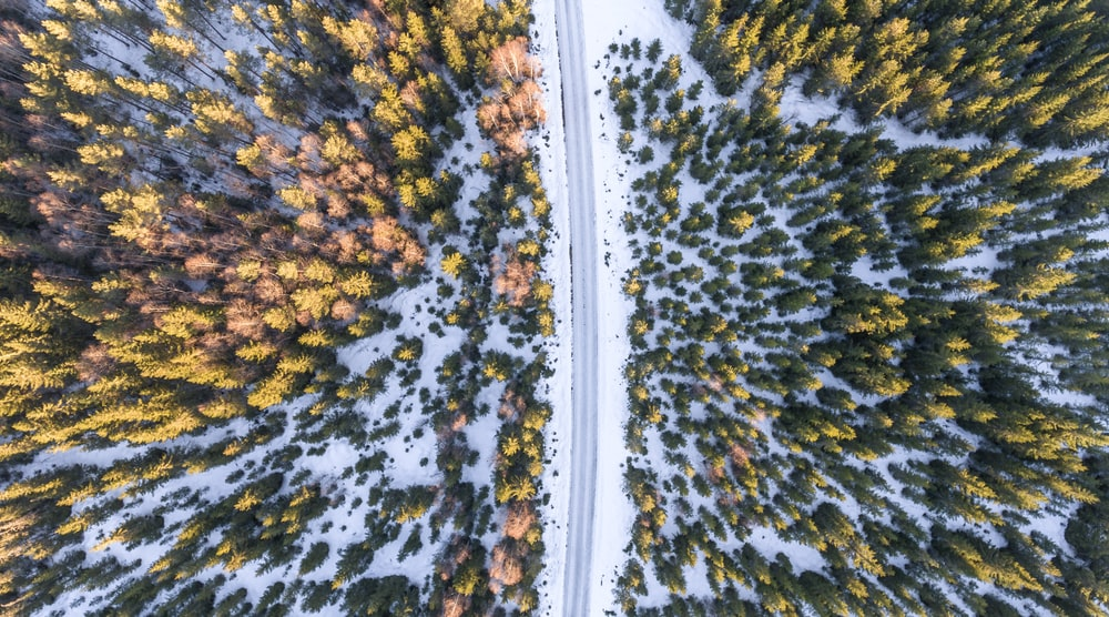 aerial photography of road beside yellow and orange maple trees