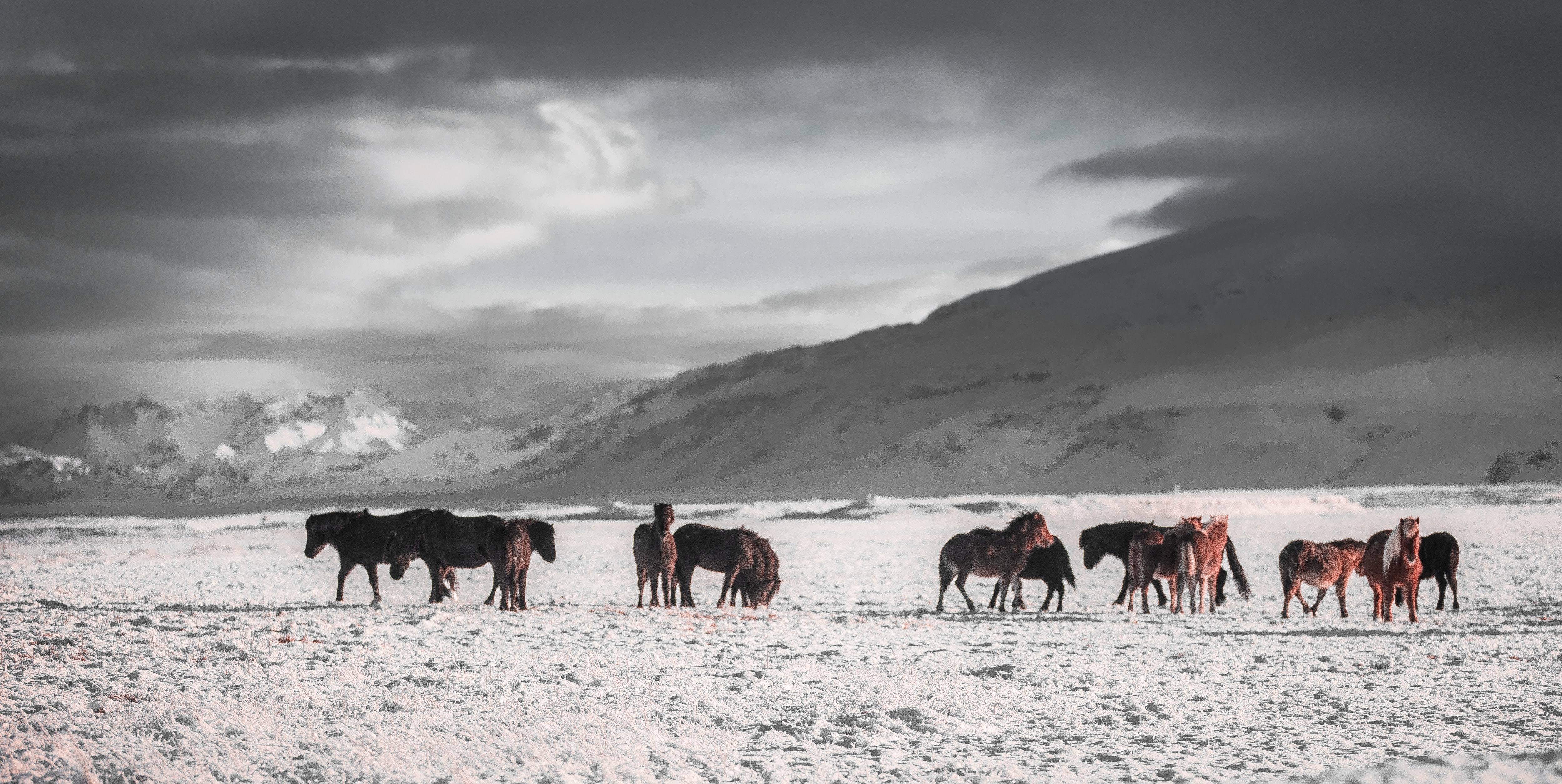 team of horses on white snow field under grey sky