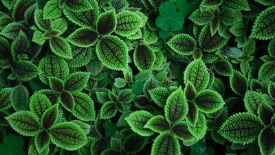 close up photo of green leafed plant botanical teams background