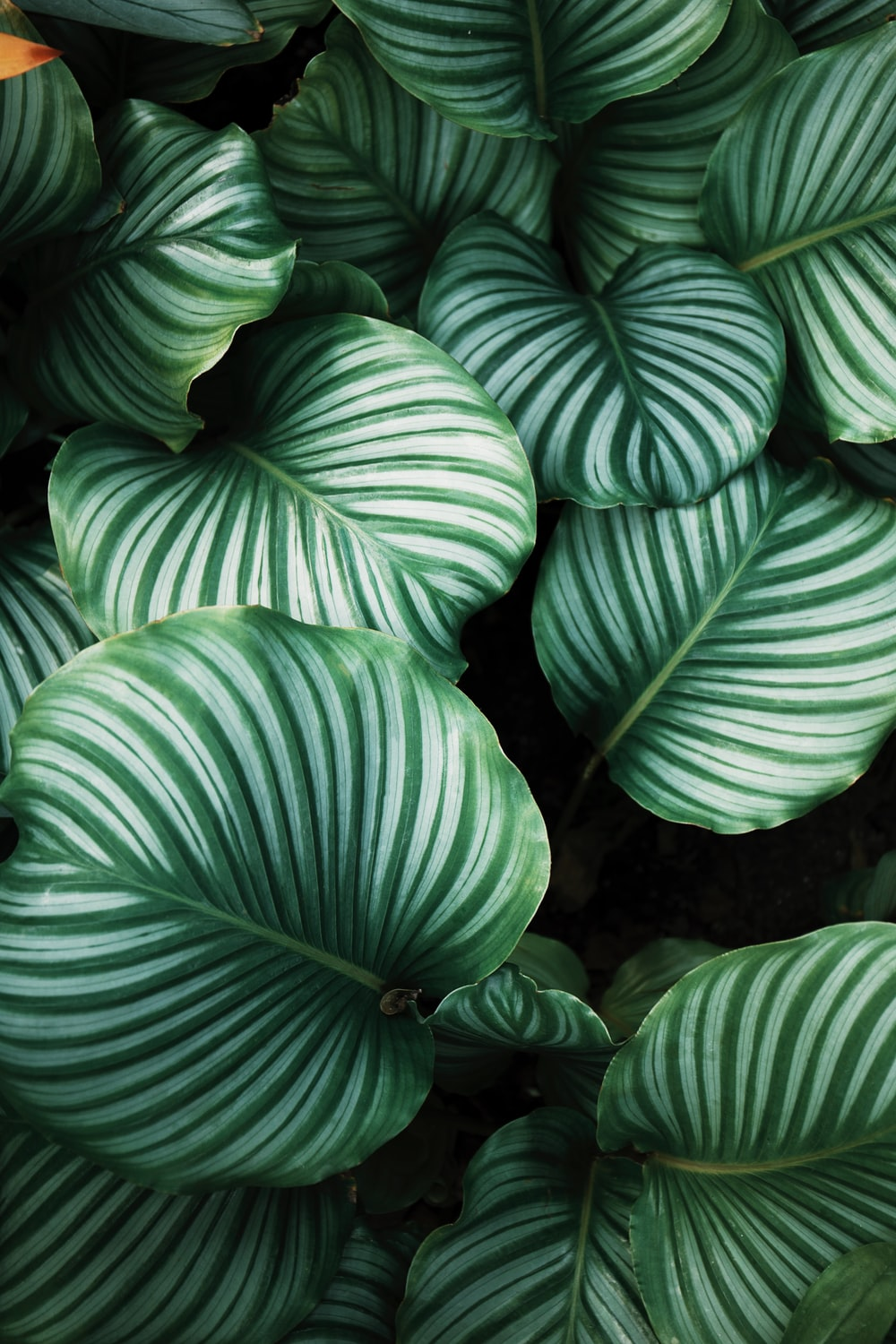green and white leafed plants