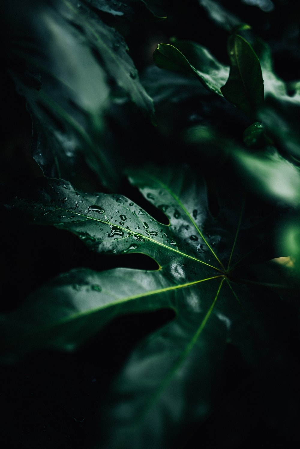 low-light photo of water drops on leaf
