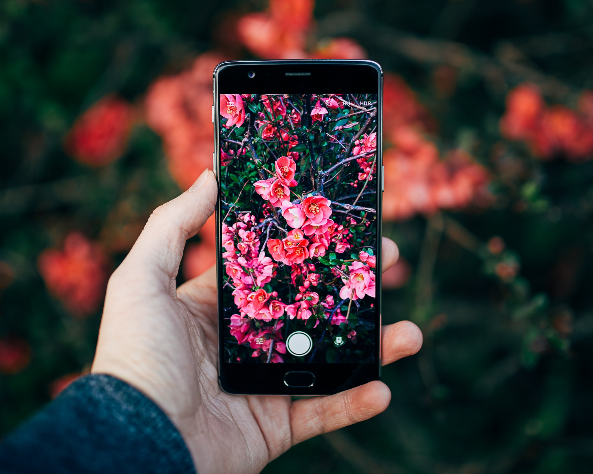 A person taking a photo of red flowers with a smartphone