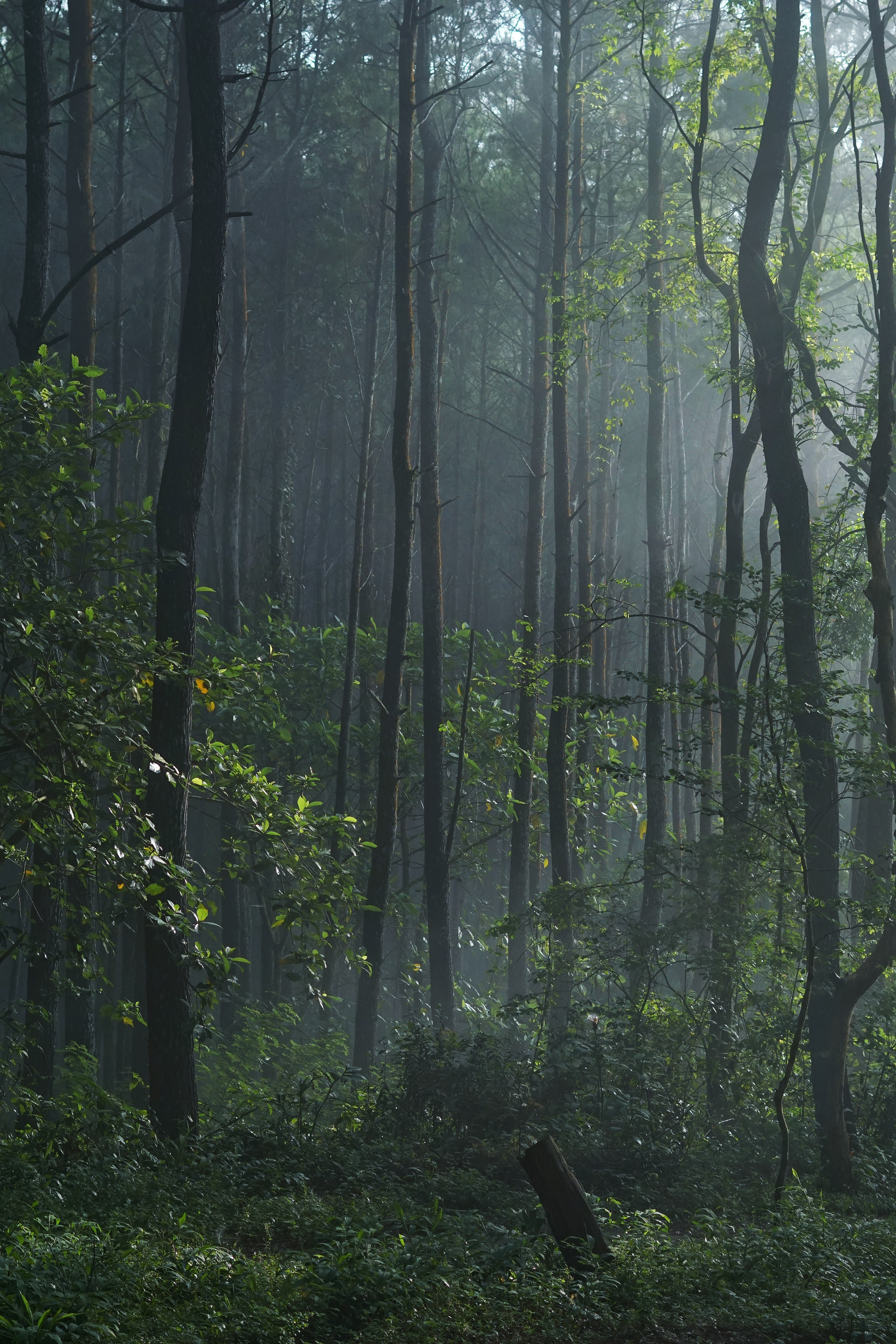 A small clearing in a lush forest